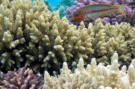 bohol: hard coral