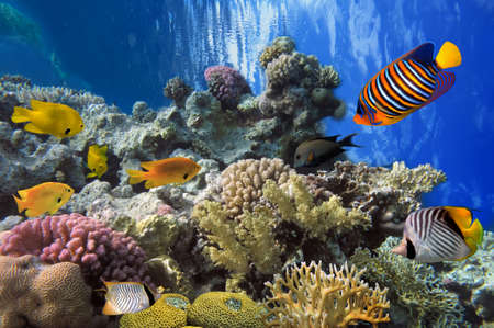 sharm el sheikh: Tropical fish and Hard corals in the Red Sea, Egypt Stock Photo