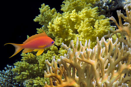 colorful coral reef with hard coral and exotic fish  photo