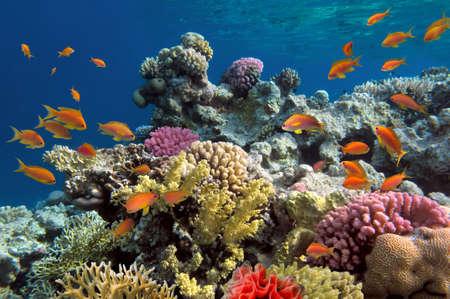 물고기와 생생한 산호초의 수중 촬영