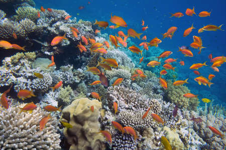 Tropical Fish on coral reef photo
