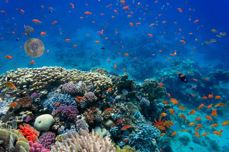 hard coral: Tropical fish and Hard corals in the Red Sea, Egypt Stock Photo