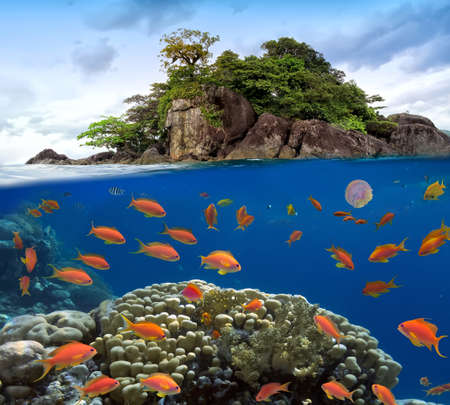 waterline: Photo of a coral colony on a reef top