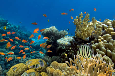 산호초 스톡 콘텐츠