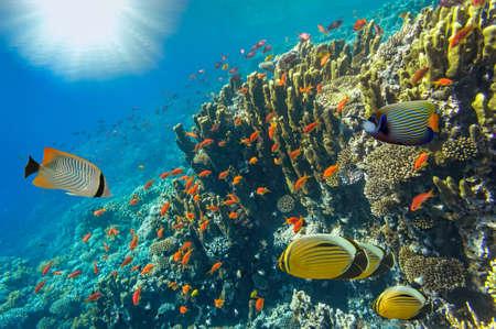 symbiotic: Underwater landscape, Red Sea, Egypt Stock Photo