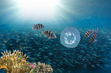 Shoal of Scissortail Sergeants (Abudefduf sexfasciatus) and jellyfishs