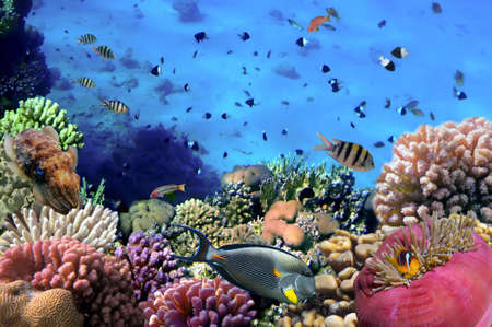 coral colony: Photo of a coral colony