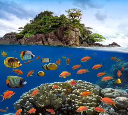 exotic fish: Photo of a coral colony on a reef top.