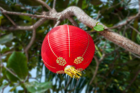 culture decoration celebration: Chinese new year decoration, Traditi onal lantern and plum blossom on a festive background Stock Photo