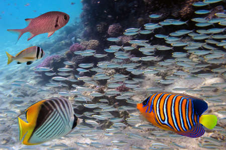 blue fish: Group coral fish in blue water. Stock Photo