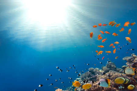 alam: Coral Reef and Tropical Fish in Sunlight. Red Sea. Egypt. Stock Photo