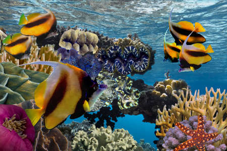 great barrier reef marine park: Colorful reef underwater landscape with fishes and corals. Red Sea