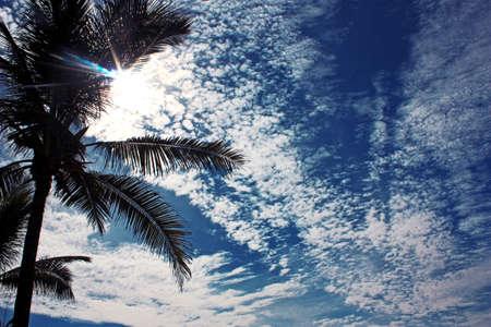 Sun on a blue cloudy sky shining through a palm