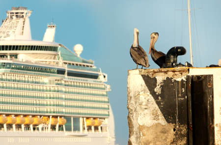 Two pelicans in Mexico planning vacation on a cruise ship
