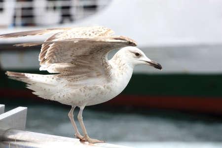 A seagull looking at a boat sailing away