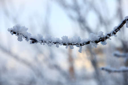 Isolated branch in snow