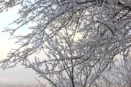 winter photos: Snowy day in Ukraine Stock Photo