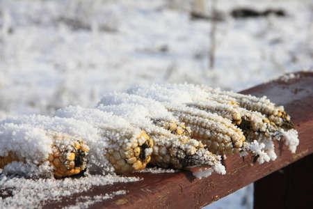 Harvest left-overs Stock Photo - 12019866