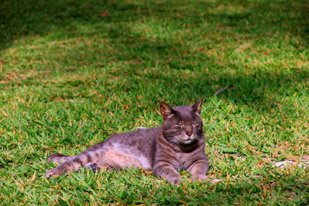 An alley cat resting in the sun on the green grass