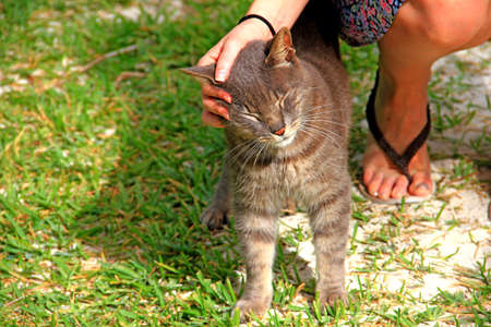 An alley cat enjoying the tender stroking of a girl Stock Photo