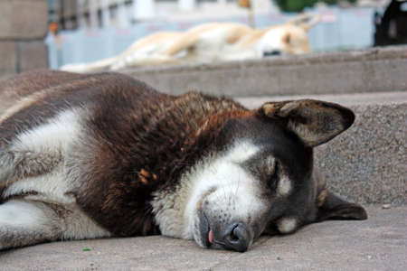 A stray dog sleeping in the middle of the city