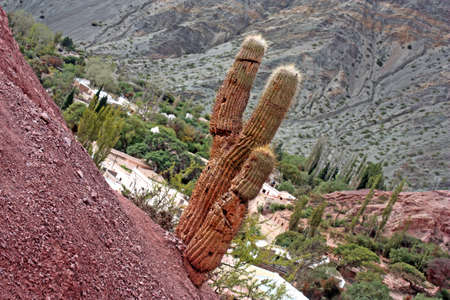 A lonely cactus growing on a hill in Humahuaca, Jujuy, Argentina
