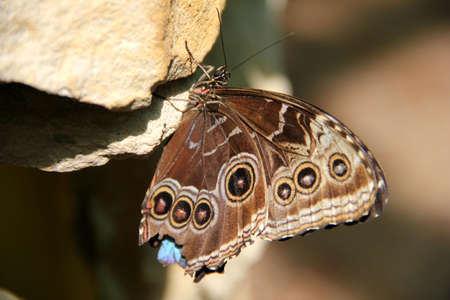 A brown butterfly sitting on a stone