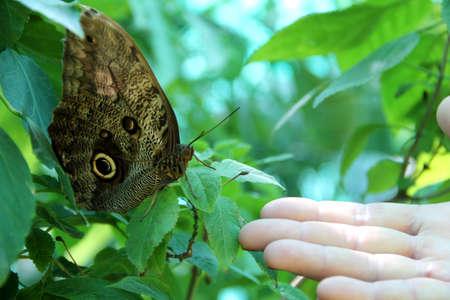 A hand open towards a butterfly