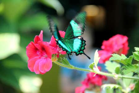A beautiful butterfly landing on a flower