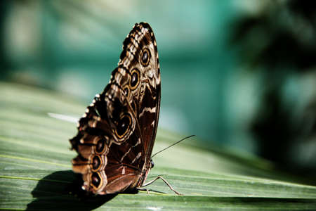 A beautiful butterfly resting on a leaf Stock Photo