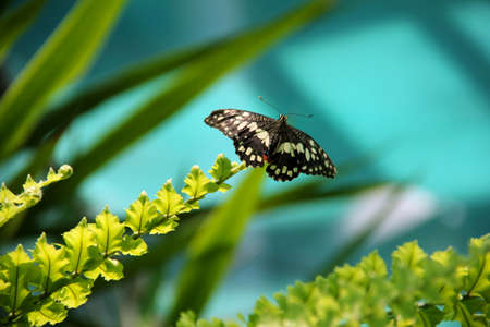 A small butterfly with the wings open is sitting on the edge of a branch