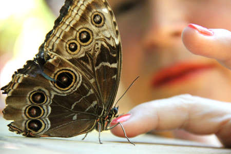 A butterfly touching a human finger in a close-up view