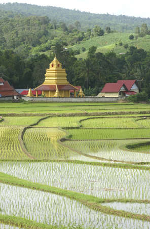 Beautiful thai temple and rice field in thailand. photo