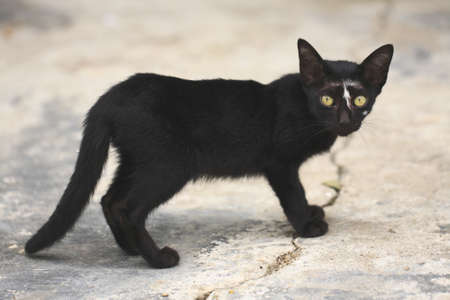Black cat with yellow eyes. photo