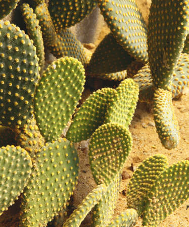 Detail of cactus growing in the garden. photo