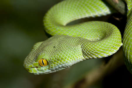 Green Snake at the forest in Thailand. photo