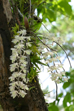 Beautiful wild orchids flower growing on a tree photo