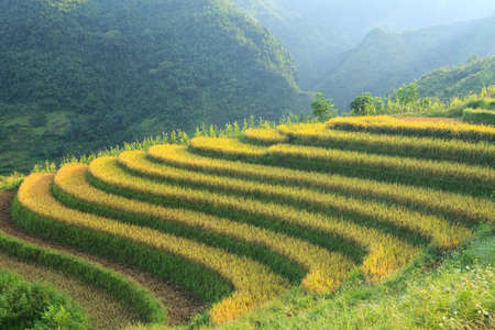 rice fields: Rice terraces in the mountains in Sapa, Vietnam