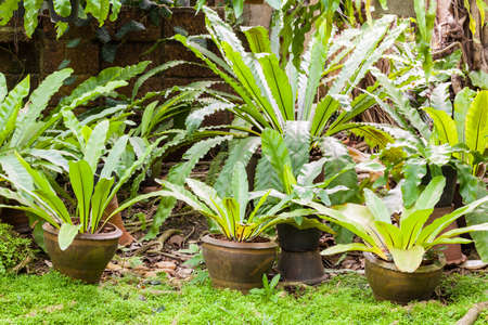 Tropical fern plant in garden photo