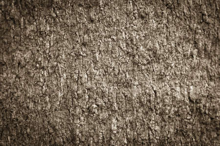 Texture shot of brown tree bark, filling the frame photo