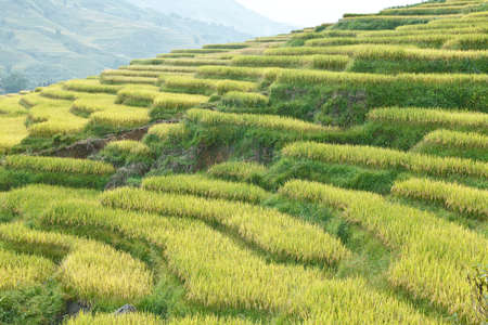 Rice terraces in the mountains in Sapa, Vietnam Stock Photo - 13611235
