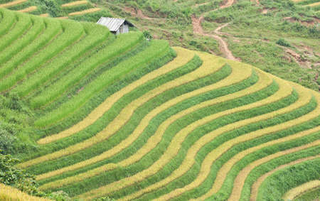 Rice terraces and cottage in the mountains in Sapa, Vietnam
