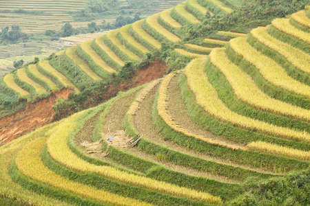 Rice terraces in the mountains in Sapa, Vietnam photo