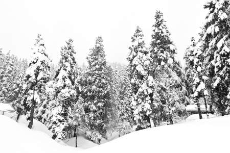 Dark and Misty Forest in Winter Landscape (black & white).  photo