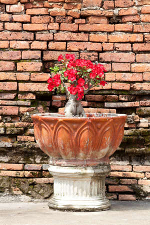 Red flowers in a pot and back wall Stock Photo - 15766061