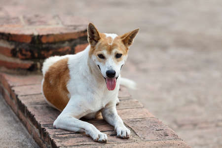 Portrait of a stray dog outdoors Stock Photo - 15766054