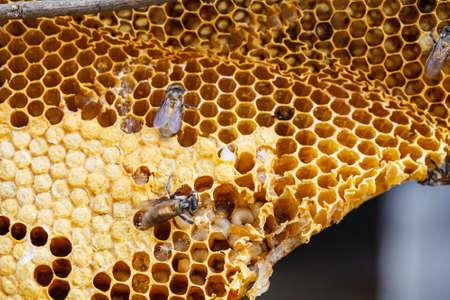 Brown beautiful honeycomb background photo