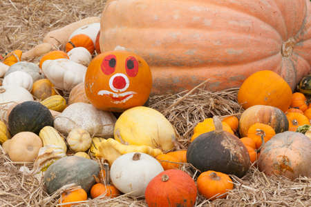 Pumpkins with different colours in the field photo