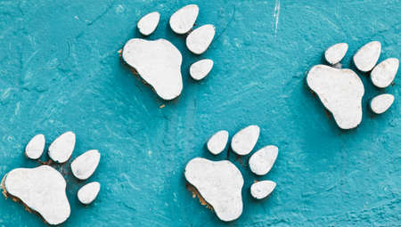 animal foot: animal foot print on blue color cement.