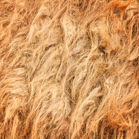 The camel wool fabric texture pattern.Background.  Stock Photo - 19736943